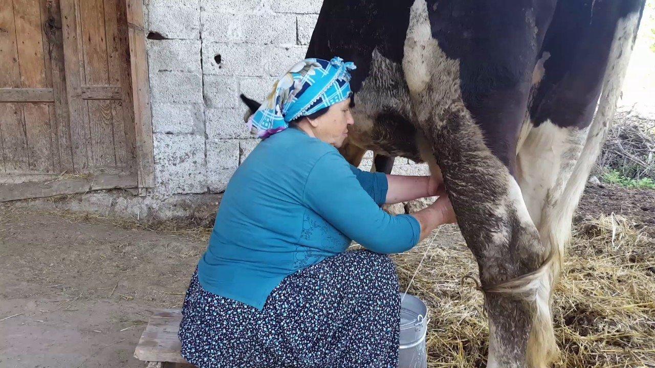 Photo of Süt Sağarken Canından Oldu0 (0)